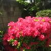 花と新緑の季節に