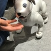 渋谷MODIで最新犬型ロボットaibo(アイボ)と触れ合ってきたら胸キュンだったので性能や価格を調べてみた