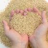 玄米の保存方法と美味しい炊き方とは??