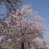 2018/4/1 桜