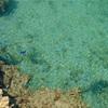 (干潮時限定)溜め池ウォッチングin大度浜海岸