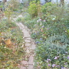 わずか3日で色濃くなる庭