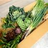 無農薬・無化学肥料の 野菜セット