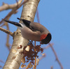 画像で名前がわかる!鳥の名前辞典ウで始まる鳥6選【保存版】