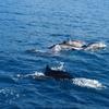 花蓮多羅滿賞鯨