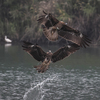 台湾の野鳥に逢いたい!
