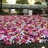 映画「『知事抹殺』の真実」と『0505再稼働反対!首相官邸前抗議』