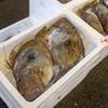 2018年10月4日 小浜漁港 お魚情報