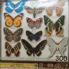 鱗翅学者の 私的標本