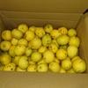 栄養満点のレモンの季節ももうすぐ終わり。だんだんと巨大になっていきます!