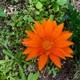 注目の花たち 🌼