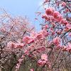 今年は桜の季節がすぐきてすぐ去った気がする
