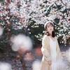 桜じゃない!色々自粛中の上海で李花と美女のポートレート撮影会