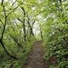 新緑の木々のトンネルを行く