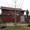 畑の銀杏 しばらく放置 Ginkgo tree in the field