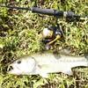 増水後のダムへ短時間バス釣りに行ってみた