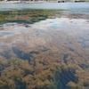 沼津周辺堤防サビキ釣り情報