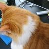 猫ちゃー の頭シリーズ