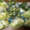 野菜の冷凍化にハマるも、買いすぎた