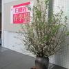 『 白甕社 春季展 』