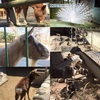 長野県松本市「アルプス公園」の動物園は無料でたくさんの動物が見れるよ!