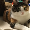 【愛猫日記】毎日アンヌさん#15