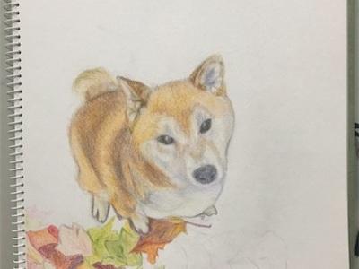 絵を描いて過ごす雨の週末〜シアトル在住の柴犬、はち君を描いています〜