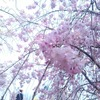 週報 04/07-04/13