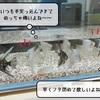 猫雑記 ~猫様達と熱帯魚~