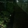 クソ寒い夜中に川遊びをする