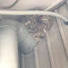 磐田市で軒下に半円型の巣を作ったスズメバチを駆除してきました!