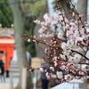 生田神社と北野天満神社そして梅の写真