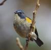 幸せの青い鳥とミソッチ