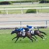 芝1600m(2歳新馬戦)種牡馬別ランキング