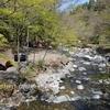 4月の道志の森で初めてのグループキャンプ