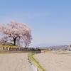 山梨県韮崎市の「わに塚の桜」のお花見♪