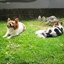 ペットとママの森小屋。