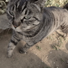 3月12日 柳原から千住を通って堤通まで猫さま歩き とその情景