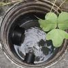 暖かいうちにやっておくべき大掃除(^^)ちょい閲覧注意。汚水ますの掃除してますか?突然の訪問販売には注意