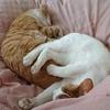 さて仕事始めに足裏舐める猫 清水昶