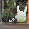 ジブリスポットが埼玉県所沢市にあった!関東の穴場観光スポット『トトロの森』潜入レポ