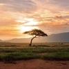 【JMIA】JUMIA(ジュミア)、アフリカのAmazonに未来はあるか