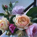 ベランダで鉢バラ栽培をするママの備忘録