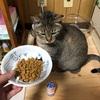 えぇぇぇぇえ!!!! 猫にLリジンって効果ないのぉぉぉお(涙) 結局、免疫力を付けるのが一番だな。。