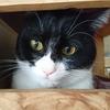 今日の黒猫モモ&白黒猫ナナの動画ー1027