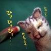 ネコくん、早生のミョウガに荒ぶる