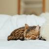 眠気の原因物質は「リン酸化」かもしれない!!という研究結果。