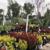 苗と植木を買いに:西日を浴びるにゃん
