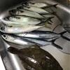 市場での地魚のつかみ取りが面白かった