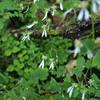 花の倉木山、再び... 2008.10.12